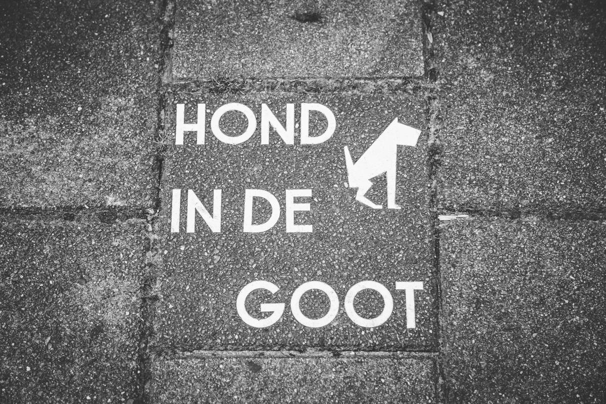 Amsterdam hond in de goot