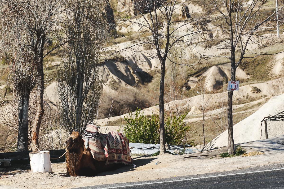 Cappadocia-56