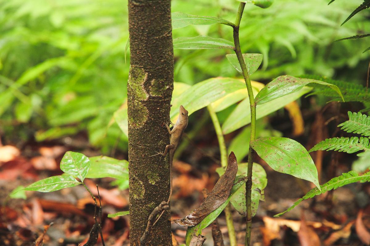 Costa Rica-42