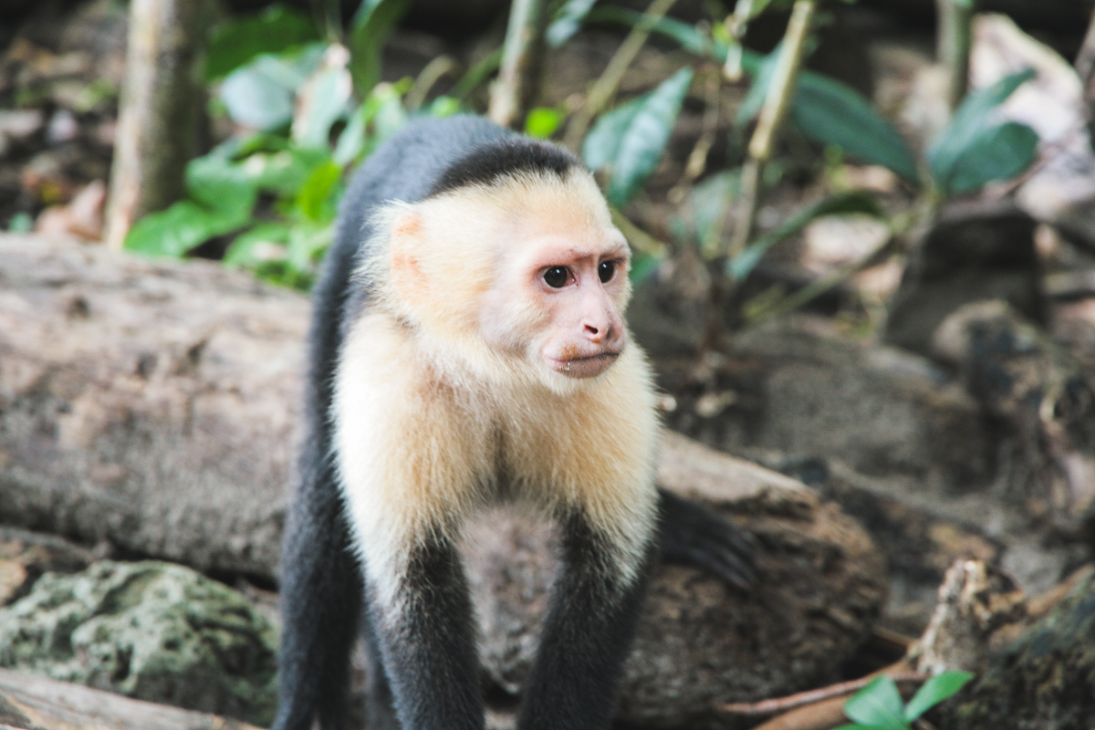 Costa Rica-67